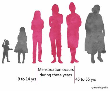 illustration of female at different phases of her life. phases between 9 years and 55 years have been highlighted to indicate the fertile phase in a female's life - Menstrupedia