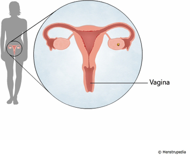 illustration of vagina - Menstrupedia